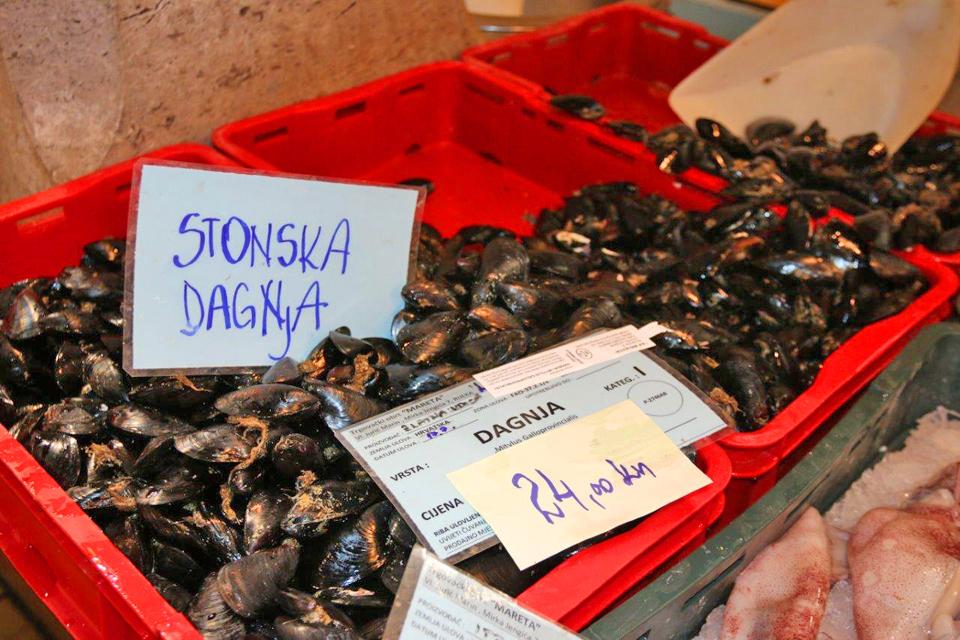 Recenzija puno mjesta za upoznavanje s ribama