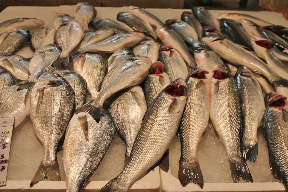 Usluge upoznavanja ribe s mora