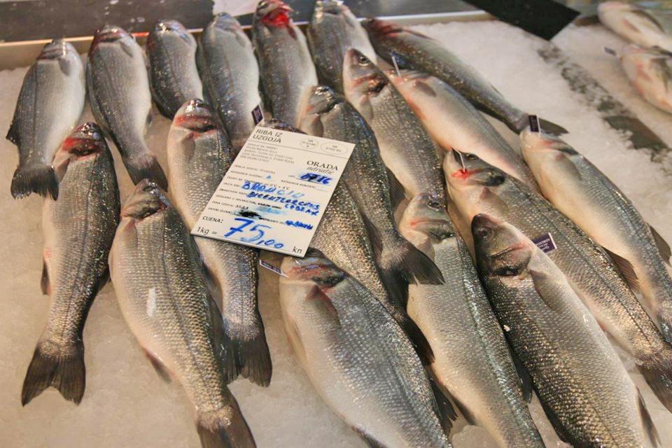 usluga upoznavanja s ribama ne datiraju društvene aplikacije
